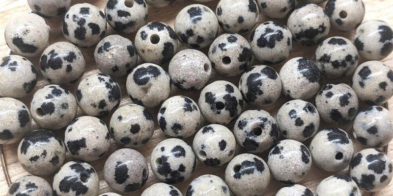 perle de japse dalmatien