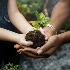 1 arbre planté