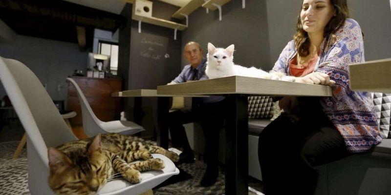 bar à chat pour se détendre