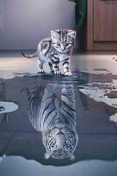 chat qui se voit en tigre