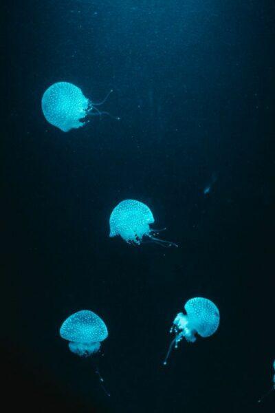 mer turquoise liberté