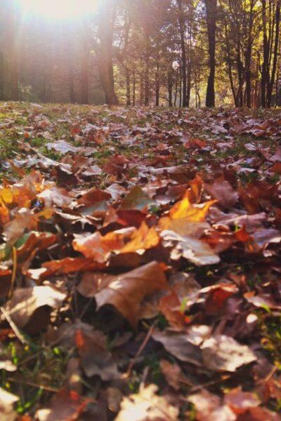 nature changement de saison