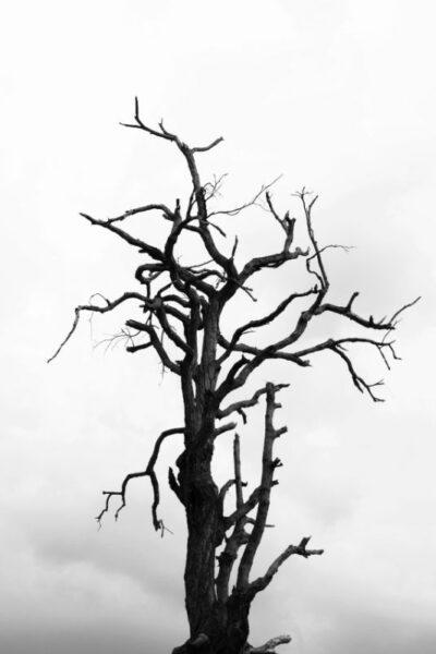 arbre de vie nature