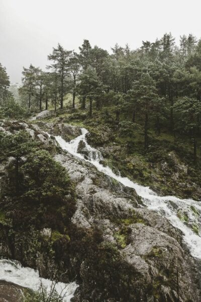 riviere mousse vert