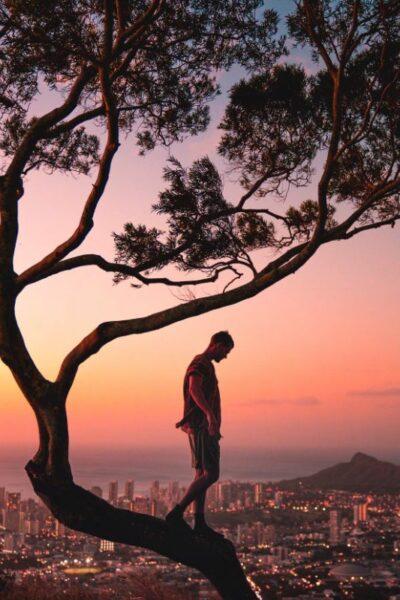 arbre de vie naturelle