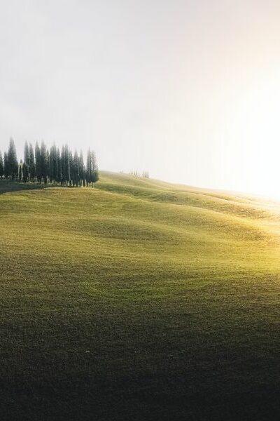 nature et champs vert de bien etre