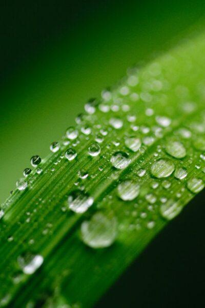 goute d'eau feuille vert nature
