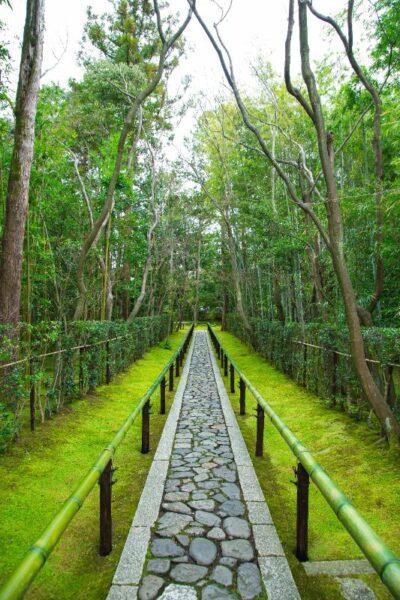 chemin vert nature relaxation