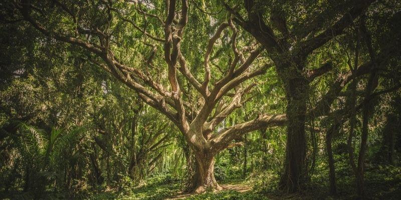 immortalité de l'arbre de vie