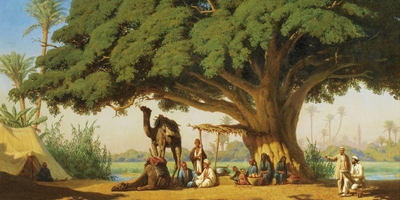 arbre de vie dans le coran