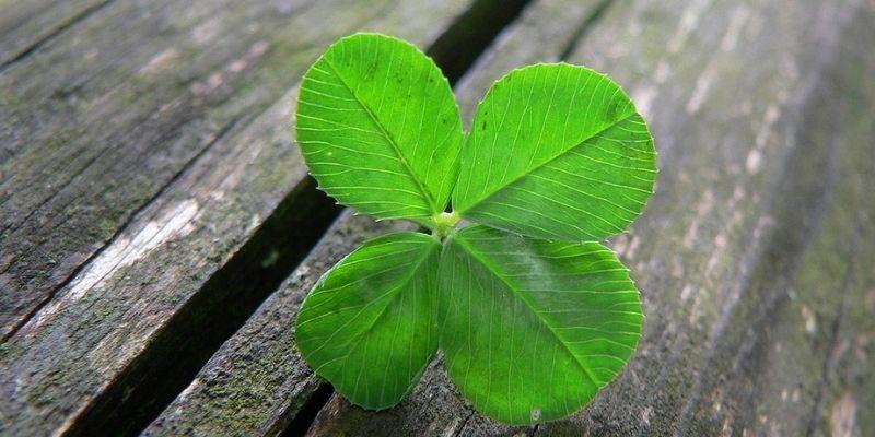 chance avec un trèfle 4 feuilles